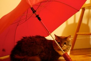 Lily and the umbrella
